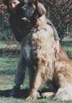 Lion d'Occitanie -