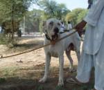 Bully Kutta picture