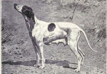 Dupuy Pointer picture