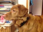 Tara - Toller (9 months)