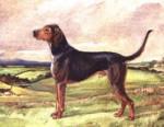 Kerry Beagle - Kerry Beagle