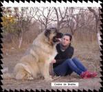 Codina de Brailita- berger du caucase - Caucasian Shepherd Dog