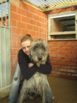 Roy... Irish Wolfhound - Irish Wolfhound