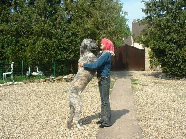 syntaxe, mon irish wolfhuond ---- LEVRIER IRLANDAIS - Irish Wolfhound