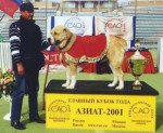 Berger d'Asie Centrale - Central Asian Shepherd Dog