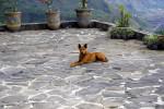 Dingo picture