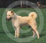 Canaan Dog - Canaan Dog