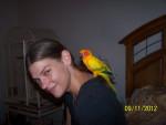 Pineapple Sun Conure - Bird (3 years)