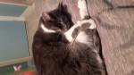 Léa - Cat (4 years)
