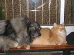 Rocky & Scherkan -