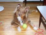 Dog Lady -  Female (3 years)