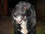 Dog Flori -  Female (12 years)