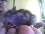 lili - Hamster (5 months)