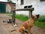 Tiergemeinschaft - Perch