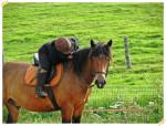 Sam - Male Pony (4 years)