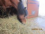 Benji - Male Pony (Other)
