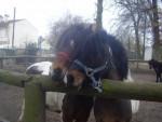 Lucky et Igor - Male Pony